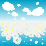Camomile field. With sun on a gradient sky Royalty Free Stock Image