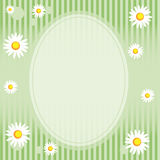 Camomile Floral Frame Stock Photos