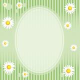 Camomile Floral Frame Stock Photos