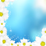 Camomile floral frame on a blue background Royalty Free Stock Photography