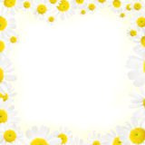 Camomile floral frame on a white background Stock Photo