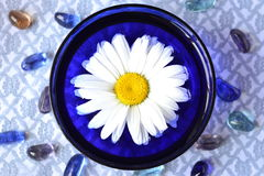 Camomile flower in a blue bowl for aromatherapy Royalty Free Stock Images