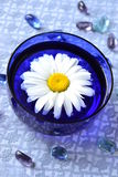Camomile flower in a blue bowl for aromatherapy Stock Photos