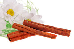 Camomile flower and cinnamon Stock Images
