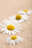 Camomile flower over recycled paper Royalty Free Stock Photography