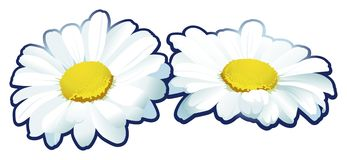 Camomile flowers. Vector image of two camomile flowers royalty free illustration