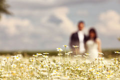 Camomile flowers  with bride and groom in the background Royalty Free Stock Photography