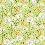 Camomile flowers and butterflies illustration. Watercolor seamless pattern Stock Photography