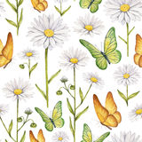 Camomile flowers and butterflies illustration. Watercolor seamless pattern Royalty Free Stock Photo