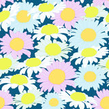 Camomile Flowers Colorful Seamless Pattern Vector Royalty Free Stock Image