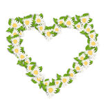 Camomile Flowers in Form Heart Isolated on White Background Royalty Free Stock Photo