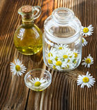 Camomile flowers in a glass jar Stock Images