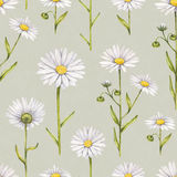 Camomile flowers illustration. Watercolor seamless pattern Stock Photo