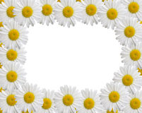 Camomile frame Royalty Free Stock Photos