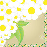 Camomile frame Stock Photography