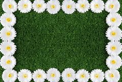 Camomile frame Stock Images