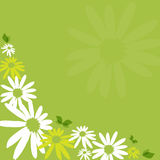 Camomile fresh green background. Abstract camomile fresh green background royalty free illustration