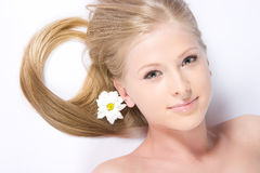 Camomile girl Stock Images