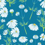 Camomile hand drawn seamless pattern vector Royalty Free Stock Images