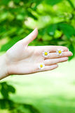 Camomile in the hands Stock Images