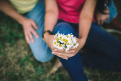Camomile in the hands of couple. Royalty Free Stock Images