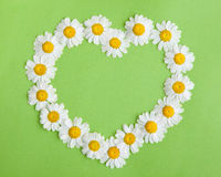 Camomile Heart on green Stock Image