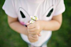 Camomile i händerna Fotografering för Bildbyråer