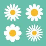 Camomile icon set. White daisy chamomile.