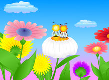 Camomile meadow two bees Royalty Free Stock Image