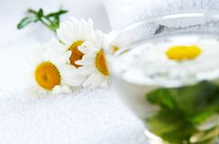 Camomile-mint herbal tea. A glass cap of camomile-mint warm herbal tea, arrnged by fresh camomile flowers and mint leaves using as alternative treatments in folk Stock Photo
