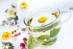 Camomile-mint medical tea. A glass cap of camomile-mint warm herbal tea, arranged by dried herbs and flowers using as alternative treatments in folk medicine Stock Images