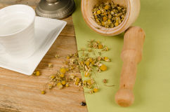 Camomile in mortar royalty free stock image