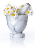 Camomile in mortar with pestle isolated on white Royalty Free Stock Photography