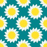 Camomile Pattern. A lot of camomiles on the blue background. Vector illustration Stock Images