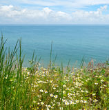 Camomile and sea shore Royalty Free Stock Images