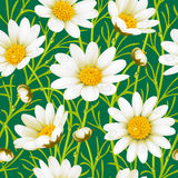 Camomile seamless background. Vector white camomile seamless background Stock Images