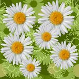 Camomile seamless pattern EPS 10. Seamless pattern with daisies/camomiles. Vector art illustration Stock Image