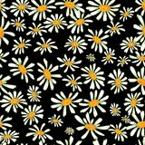 Camomile seamless pattern. Flower camomile seamless pattern background. Daisies medical vector sketch illustration Royalty Free Stock Photo