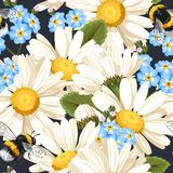 Camomile seamless pattern Stock Images