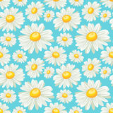 Camomile seamless pattern Royalty Free Stock Photos