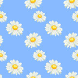 Camomile seamless pattern Royalty Free Stock Images