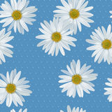 Camomile seamless Stock Photos