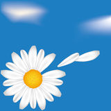 Camomile on the ske. Camomile on the sky cloudy background. EPS10 Royalty Free Stock Image