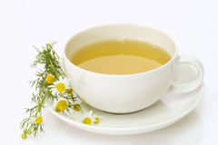 Camomile tea Stock Photos