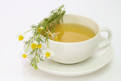 Camomile tea Stock Image