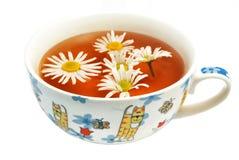 Camomile tea Stock Photos