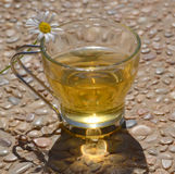 Camomile tea. Stock Photography