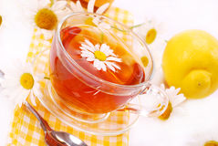 Camomile tea in glass Stock Photos