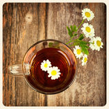 Camomile tea old photo Stock Photos