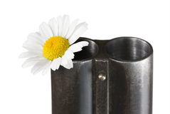 Camomile in a trunk of a fowling piece Stock Image